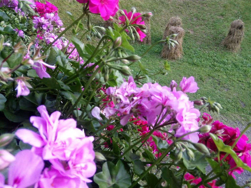Blumenfreuden.jpg