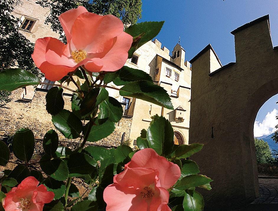 Lienz-Rose.jpg